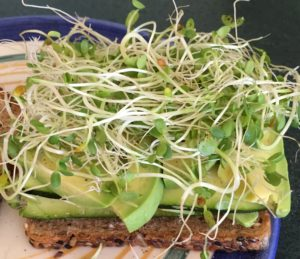 nutrition sprouts layer